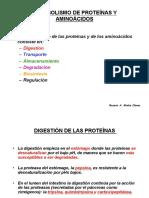 17 Piruvato deshidrogenasa