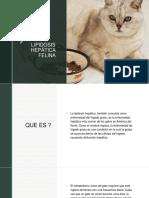 Lipidosis Hepatica