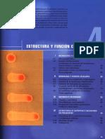AM Lectura02 Morfología.celular