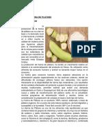 INFORME N°02 Obtencion de harina de platano