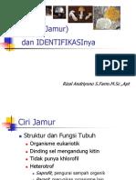identifikasi JAMUR