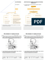 Ficha Sistema Respiratorio