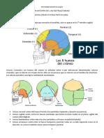 fonoestomatologia mabel.docx