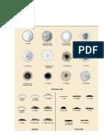 Analisis Molecular DNA