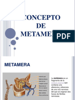 metamerasydesarrolloembrionariogrupo4-160405151808 (1)
