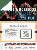 diapositiva  acidos nuclecos