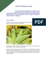 El Cultivo del Maíz para Jojoto1.doc