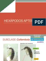 entomologiaLaboratorioEvaluacion2