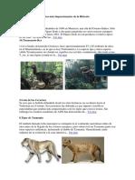 Los 10 Animales Extintos Más Impresionantes de La Historia