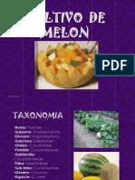 FenologiaMelon.ppt