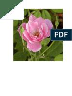 mawar 8.doc