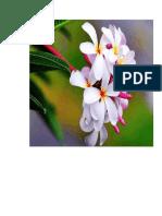 bunga anggrek.doc