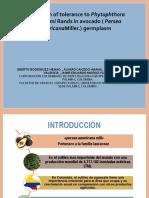 Exposicion Fito- Aguacate