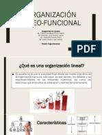 Lineo-funcional