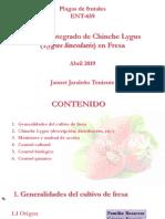 Manejo Integrado de Lygus en Fresa