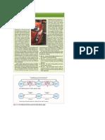 PTT - Sumar Proces de Negoiere