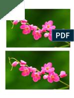 bunga anggrek 1.doc