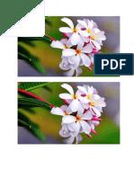 bunga anggrek 1