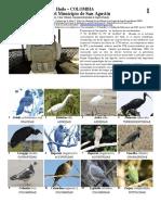 819 Colombia Aves de San Agustin