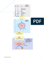 Bioq 16(a)- Metabolismo 4- Krebs