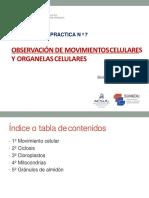 Semana 7- Práctica-Ciclosis y Observación de Organelas