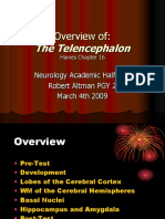 AHD the Telencephalon R. Altman 4-03-09
