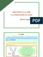 anatomia_braguer_i_produccia_llet.pdf