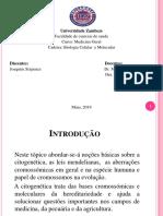 Citogenetica Joaquim Sixpence