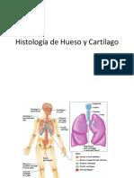 Histología de Hueso y Cartílago Teórico