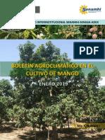 Boletín Agroclimático Mango_ENE2019