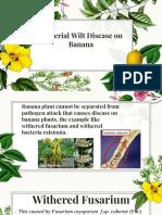 Bacterial Wilt Disease on Banana