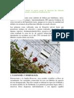 floricultura manual.docx