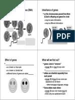 18 Genetics--v2010 STUDENT PACKET.pdf