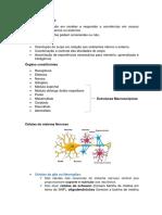 Neuroanatomia Completo