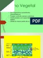 6. Reino Vegetal Presentación