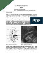 anatomía y fisiología renal