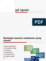 Anti Fungal Agents Forshow