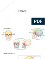Craneo presentacion rx