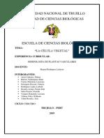 TEJIDOS VASCULARES TERMINADO.docx