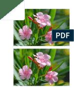 bunga anggrek 6