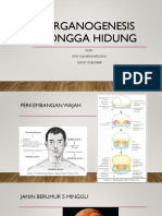 ORGANOGENESIS RONGGA hidung