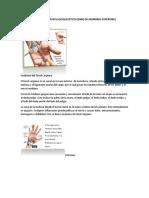 Desordenes Musculoesqueleticos