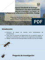 Práctica Libre Insectos