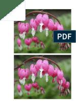 bunga anggrek 7