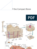 Parts of Compact Bone