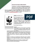 Las Organizaciones Que Protegen El Medio Ambiente