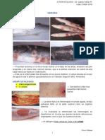 Clase 4 Vibriosis Pseudomona YersioniosisPseudo BKD Nocardiosis Micobacterioris.