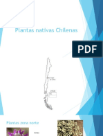 Plantas nativas Chilenas