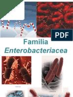 familia de las enterobacteriaas