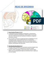 áreas en neurología